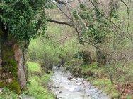 Το δάσος της Ζαρούχλας δίνει δυναμική στα χωριά της ορεινής Αιγιάλειας