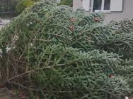Τρίκορφο - Ο αέρας έριξε κάτω το χριστουγεννιάτικο δέντρο (video)