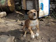 Ναύπακτος - 57χρονος είχε αλυσοδεμένα, τους τελευταίους μήνες, δύο σκυλιά