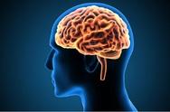 Ο εγκέφαλος αντιλαμβάνεται τα απτικά ερεθίσματα σε εξωτερικά αντικείμενα όπως και στα μέλη του σώματός του