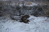 Θεσσαλονίκη: Αρκούδα επέζησε 4 μέρες εγκλωβισμένη σε πολικές θερμοκρασίες (φωτο)
