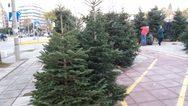 Μετά τα Θεοφάνεια η ανακύκλωση των φυσικών χριστουγεννιάτικων δέντρων