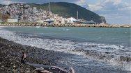 Σκόπελος: Νεκρά δελφίνια και θαλάσσιες χελώνες λόγω των ισχυρών ανέμων