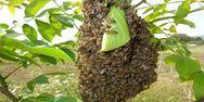Η Επιτροπή της ΕΕ απαγόρευσε τη χρήση εντομοκτόνου που θεωρείται επιβλαβές για τις μέλισσες