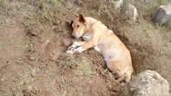 Γαλλία - Άνδρας που σκότωσε σκύλο καταδικάστηκε σε έξι μήνες φυλάκιση