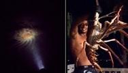 Ψαράδες ανακαλύπτουν τυχαία έναν γιγαντιαίο αστακό (video)