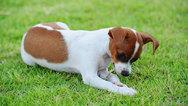 Τα λάθη που γίνονται τις πρώτες ημέρες υιοθεσίας ενός σκύλου