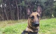 Θεσσαλονίκη: Αστυνομικός σκύλος ξετρύπωσε 1,2 κιλά κάνναβης από σπίτι 65χρονου