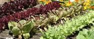 Η κλιματική αλλαγή 'χτυπάει' τη λαχανοκομία