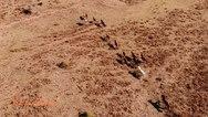 Τα άγρια άλογα του Παναχαϊκού όρους (video)