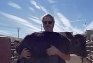 Ο Joaquin Phoenix διέσωσε δύο αγελάδες (video)