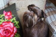 Ένας σκύλος με… μούσι (φωτο)