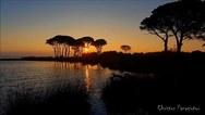 Δάσος Στροφυλιάς: Το σπάνιο οικοσύστημα που φτάνει ως την παραλία (video)