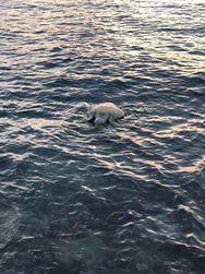Πάτρα - Νεκρή θαλάσσια χελώνα εντοπίστηκε στην παραλία των Βραχναιΐκων (φωτο)