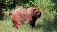 Επιδρομές αρκούδων σε κοτέτσια χωριών σε Γρεβενά και Καστοριά