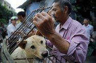 Κίνα: Η Σεντζέν απαγορεύει την κατανάλωση γατιών και σκύλων