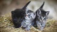 Covid-19: Μπορούν να κολλήσουν οι γάτες, δύσκολα οι σκύλοι