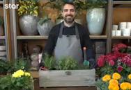 Σωτήρης Βρεττός: 'Αυτά τα φυτά είναι κατάλληλα για το μπαλκόνι σας' (video)