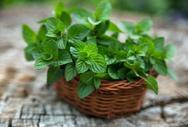 Τα βότανα που κάνουν καλό στο στομαχόπονο