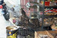 WWF: Έρευνα σε 5 Ασιατικές χώρες για τη σύνδεση της έξαρσης των πανδημιών με τη λειτουργία παράνομων αγορών άγριας ζωής