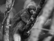 Αφρικανικές μαϊμούδες είχαν φθάσει στη Ν. Αμερική πριν από 34 εκατ. χρόνια (φωτο)
