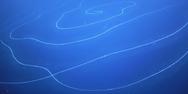 Ανακαλύφθηκε στη θάλασσα ζώο μήκους άνω των 120 μέτρων (video)