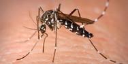 Ο κορωνοϊός δεν μεταδίδεται με τα κουνούπια