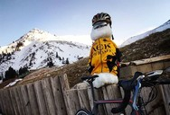 Ο δικέφαλος αετός που «επισκέφτηκε» το Χιονοδρομικό Κέντρο Καλαβρύτων