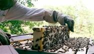 Έναρξη υποβολής αιτήσεων για το «Εθνικό Μελισσοκομικό Πρόγραμμα έτους 2020»