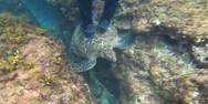 Τουρίστας στην Ταϊβάν πατά πάνω σε χελώνα την ώρα που κάνει snorkelling (video)