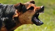 Πύργος: Σκύλος δάγκωσε στο πόδι ανήλικη