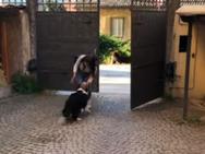 Κοπέλα ξανασμίγει με τον σκύλο της μετά την καραντίνα (video)