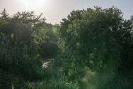 Η θολωτή πέτρινη γέφυρα της Πάτρας που μοιάζει να βρίσκεται σε… ζούγκλα (φωτo)
