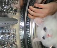 Γάτα σε αναπαράσταση αποστολής στο διάστημα (video)