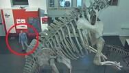 Διέρρηξε μουσείο για να βγάλει selfies με... δεινόσαυρους (video)
