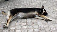 Αιτωλοακαρνανία: Έδεσε σκύλο με αλυσίδα στο αυτοκίνητό του