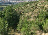 Θεσσαλονίκη - Συνεχίζει το καταστροφικό του έργο το έντομο, στο Σέιχ Σου