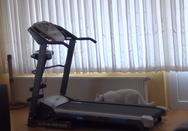 Γάτα παίζει με διάδρομο γυμναστικής (video)