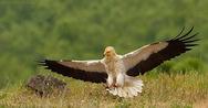 Αυτό είναι το πουλί με τα 21 διαφορετικά ονόματα στην Ελλάδα