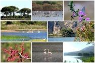 Εθνικό Πάρκο Κοτυχίου - Στροφυλιάς... Εκεί που συγκεντρώνεται η ομορφιά της ελληνικής φύσης (video)