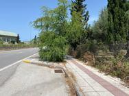 Πάτρα - Σε τραγική κατάσταση βρίσκονται τα πεζοδρόμια και η νησίδα στη Βενιζέλου (φωτο)