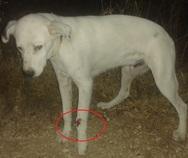 Πάτρα: Οδηγός αυτοκινήτου πάτησε σκυλάκι και το άφησε αβοήθητο (φωτο)