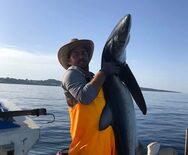 Πύργος - Έβγαλε δίμετρο μπλε καρχαρία 48 κιλών