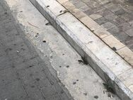 Πάτρα: Κατσαρίδες στον πεζόδρομο της Ρήγα Φεραίου έκαναν τη… βόλτα τους!