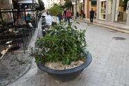 Πάτρα: Έκλεψαν μεγάλη ζαρντινιέρα από τον πεζόδρομο της Ρήγα Φεραίου