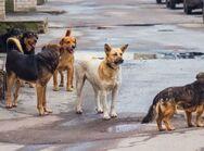 Καταγγελία - Αδέσποτα σκυλιά επιτέθηκαν και τραυμάτισαν γυναίκα στην Πάτρα