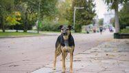Η Αίγινα φιλοδοξεί να γίνει η πρώτη πόλη χωρίς αδέσποτους σκύλους