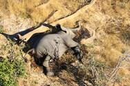 Μυστήριο με τους θανάτους ελεφάντων στην Μποτσουάνα