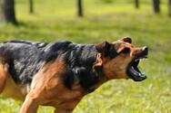 Θεσσαλονίκη: Την λήστεψαν με την απειλή μεγαλόσωμου σκύλου