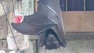 Η τεράστια νυχτερίδα που προκάλεσε τρόμο στο Twitter